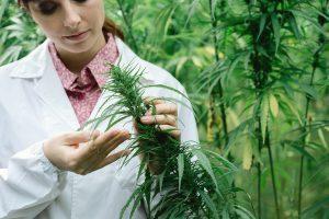 Препараты из марихуаны душу выпьет конопля из потолка